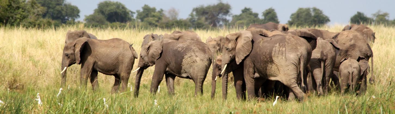 Uganda Safaris Murchison Falls