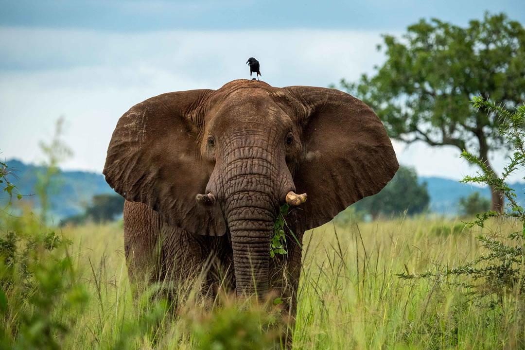 Uganda Wildness Tours