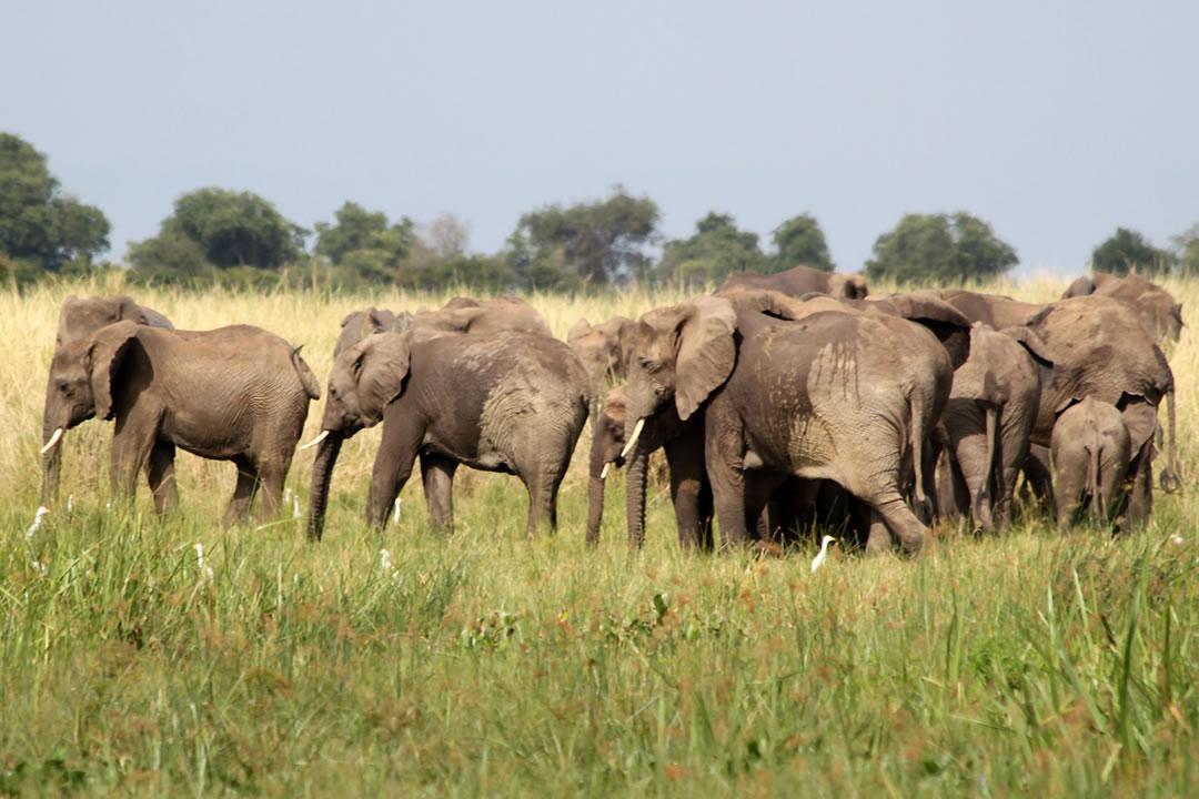 16 days Uganda adventure safari Holiday