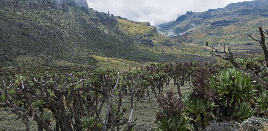 Uganda Mountain Tours