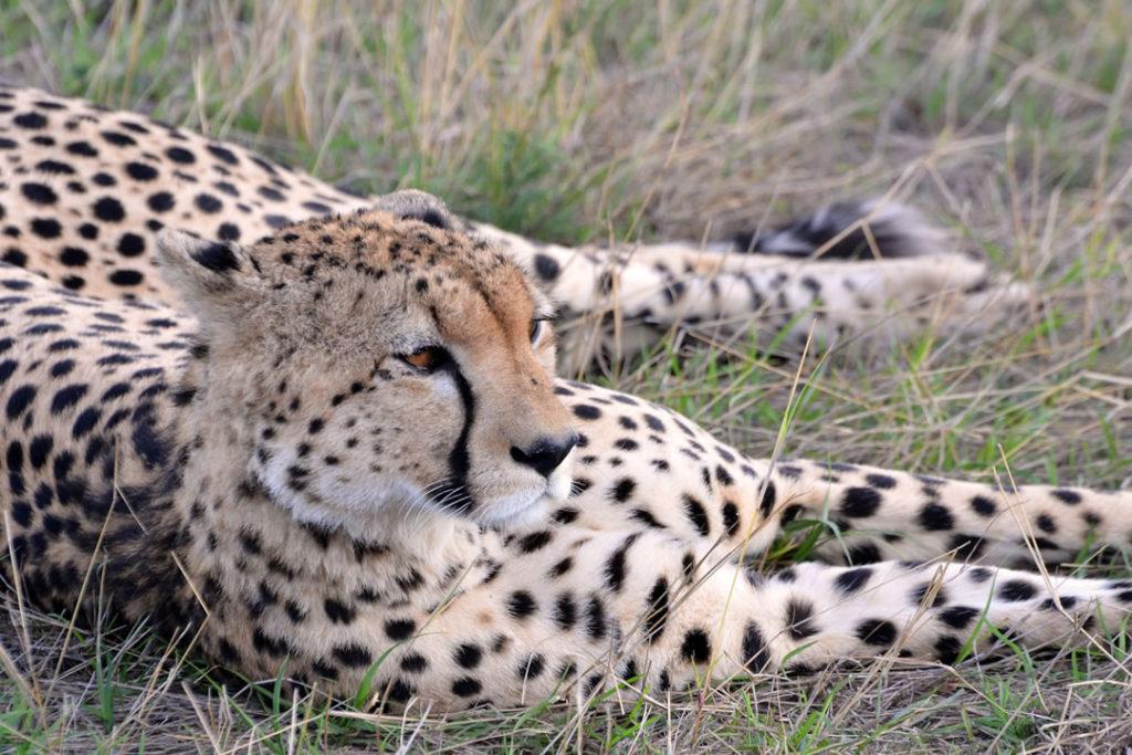 Uganda Holiday Safari