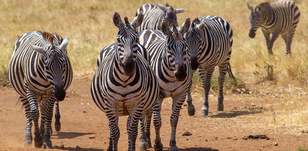 wildlife at Lake Mburo