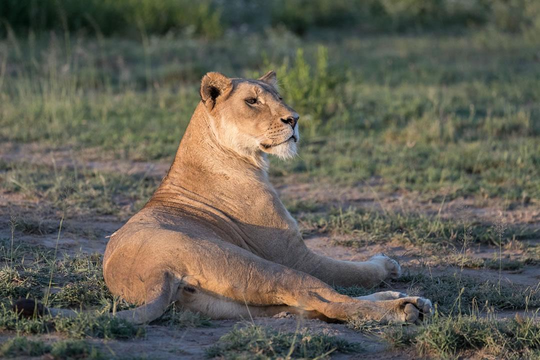 3 days murchison safari