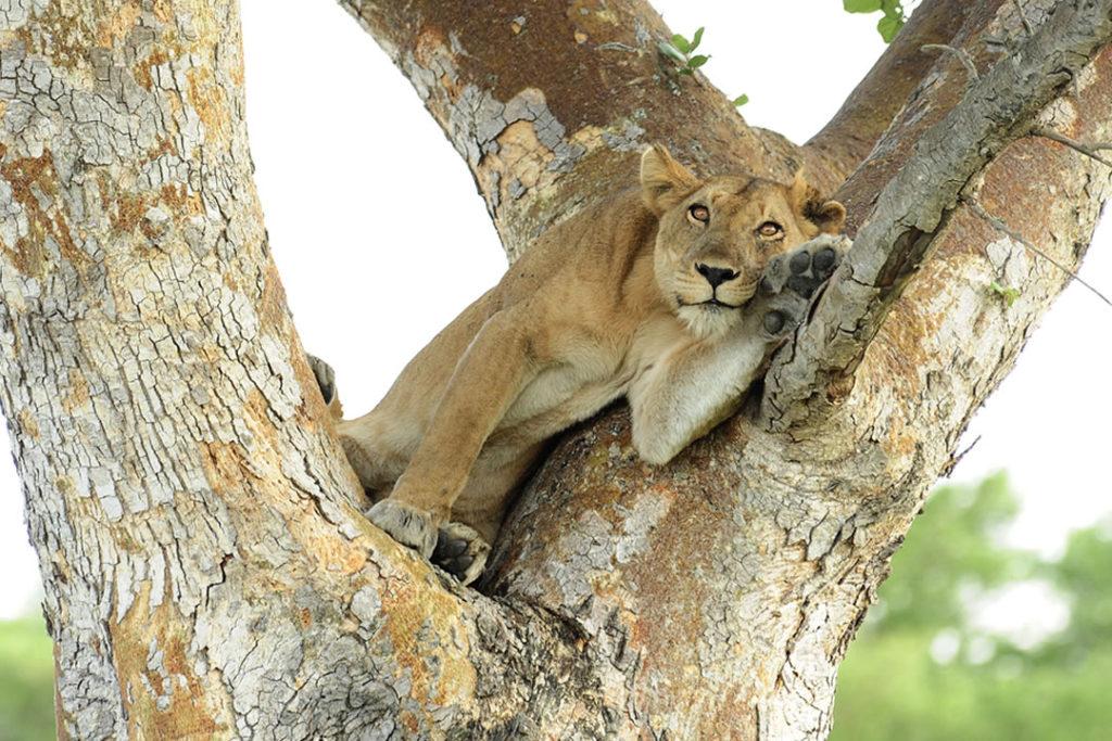 Game Viewing and Wildlife Safari Tour